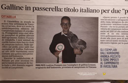 Championships of Italian poultry - Paduan hen