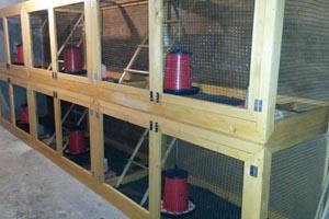 nuove gabbie per riproduttori